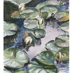 Lilly Pad Study